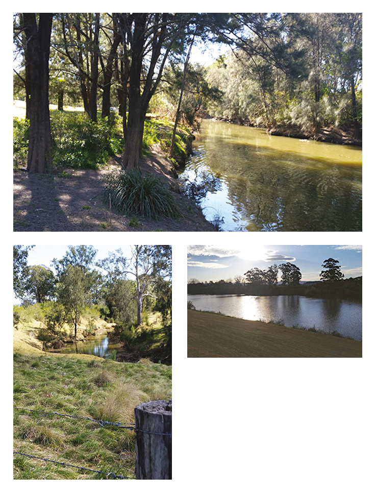 Three photographs depicting the waterway and the tree-lined banks of South Creek.