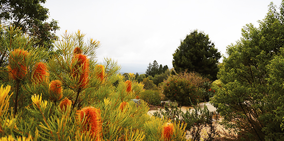 Photograph of flora in Mount Tomah