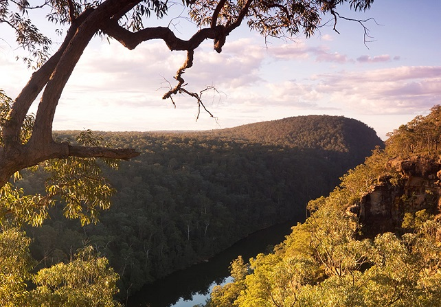 Tree overlooking gorge in Blue Mountains